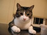 catttt.jpg